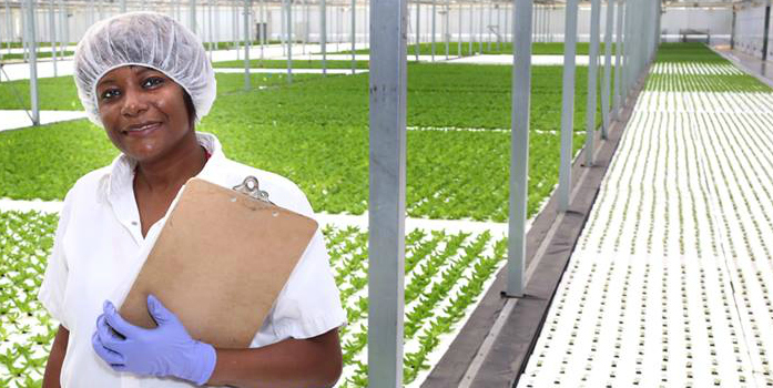 A woman wearing rubber gloves and a sanitary cap stands holding a clipboard inside a large greenhouse, with a number of plants just starting to sprout.